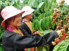 export vietnamita