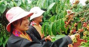 export vietnamita vietnam