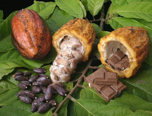 mercato del cacao