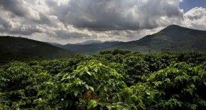 Perù luogh coltivazione di caffè