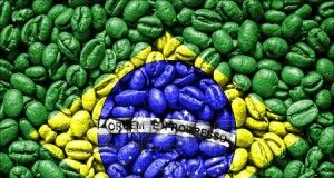 Brasile Mondo nuovo amarelo