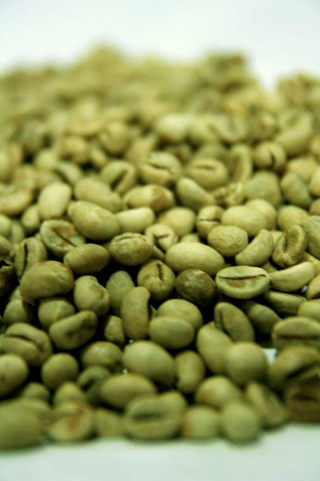 chicco di caffè verde più salute