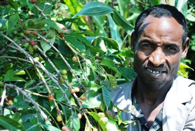 CONTADINO ETIOPIA COLTIVAZIONE