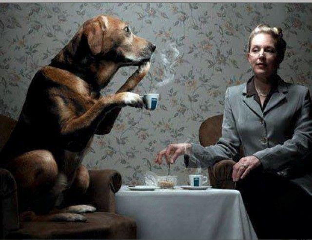 cane beve caffè