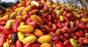il cacao ivoriano