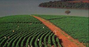 Conab raccolto brasiliano