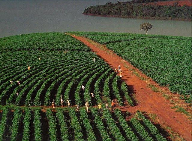 coltivazione brasile campo