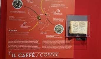 mumac museo storia naturale