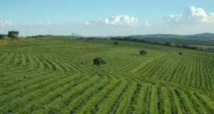 brazile fazenda caffè