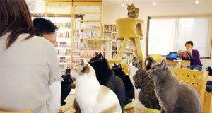 gatti caffetteria caffè