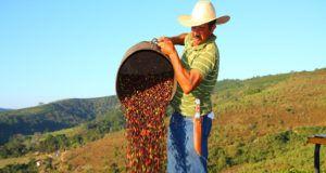 produttori produzione brasiliana