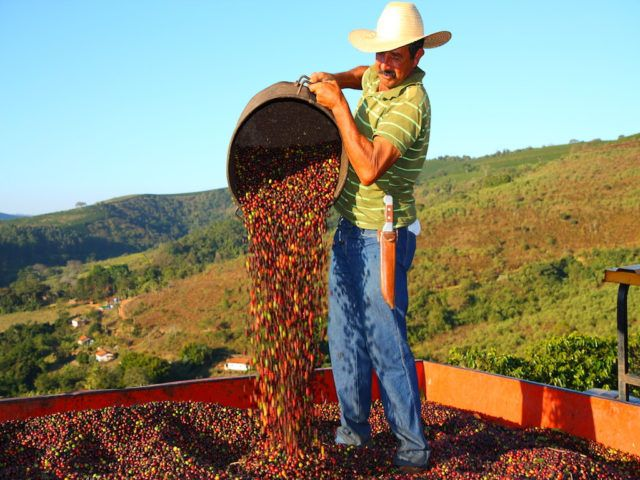etichette di qualità La raccolta nel Cerrado, Brasile