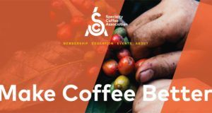 sca specialty coffee association