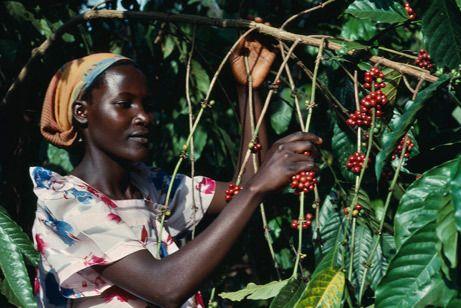 export ugandese