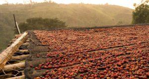 etiopia caffè grenci