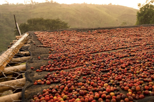 etiopia caffè