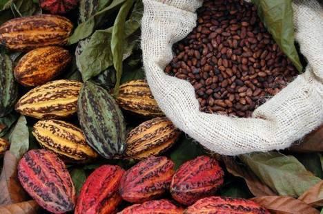 il mercato del cacao Perù