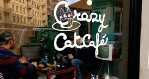 Crazy Cat café