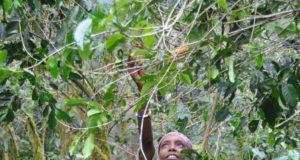 """Chicco d'oro In omaggio al tema della giornata internazionale del caffè in programma il 1 ottobre 2018 ed avente come tema """"le donne nel settore del caffè"""", è stata in esposizione per tutto il periodo di MilanoCaffè la gigantografia di uno scatto fotografico realizzato da Silvia Minella. La foto scattata nel mezzo dell'altopiano etiope, nella regione di Kaffa, tra gli arbusti selvatici di caffè arabica che crescono spontaneamente nella foresta pluviale raffigura una giovane abitante del villaggio di Bonga che allunga le braccia verso il cielo per lo scopo di raccogliere un'unica preziosa ciliegia di caffè selvatico. L'immagine racchiude un momento magico che esprime il valore attribuito dalla donna al miracoloso frutto, dono della natura"""