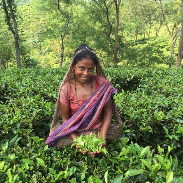 Jalinga Tea Run