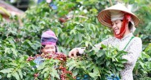 mard Vietnam associazionismo Una bella immagine scattata in una piantagione del Vietnam