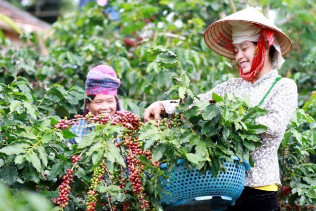 Vietnam Una bella immagine scattata in una piantagione del Vietnam