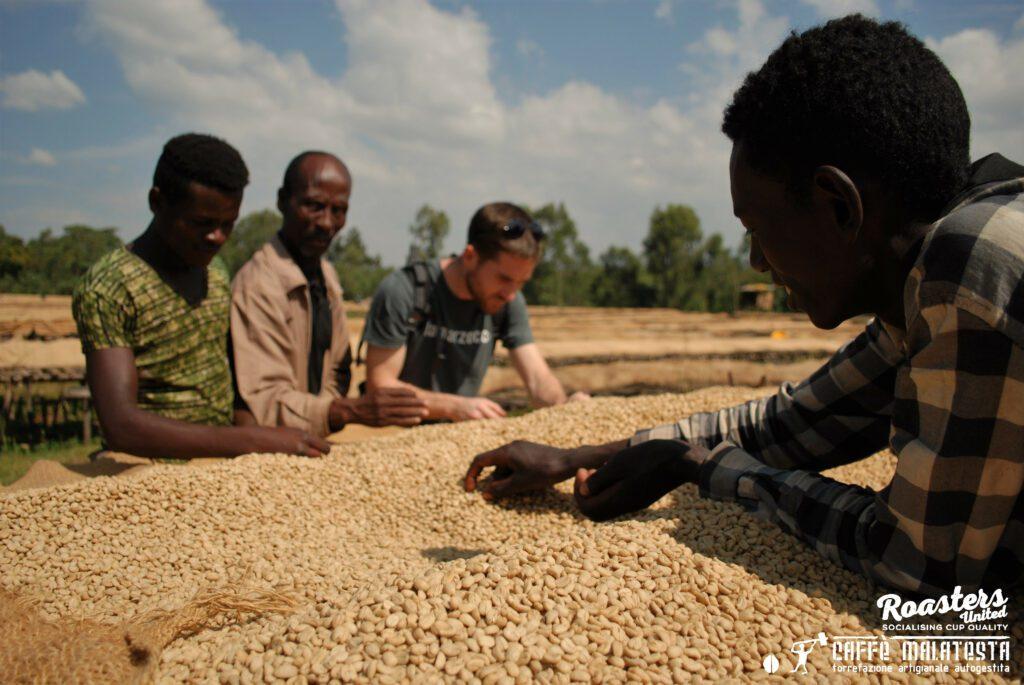 Taramesa Natural Coffee Drying Sidama Coffee Farmers Cooperative Union (SCFCU).