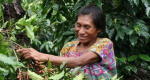 Produttrice caffè Guatemala crisi dei prezzi Una produttrice di caffè del Guatemala