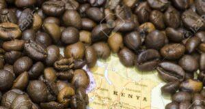 kenya istituto di ricerca sul caffè