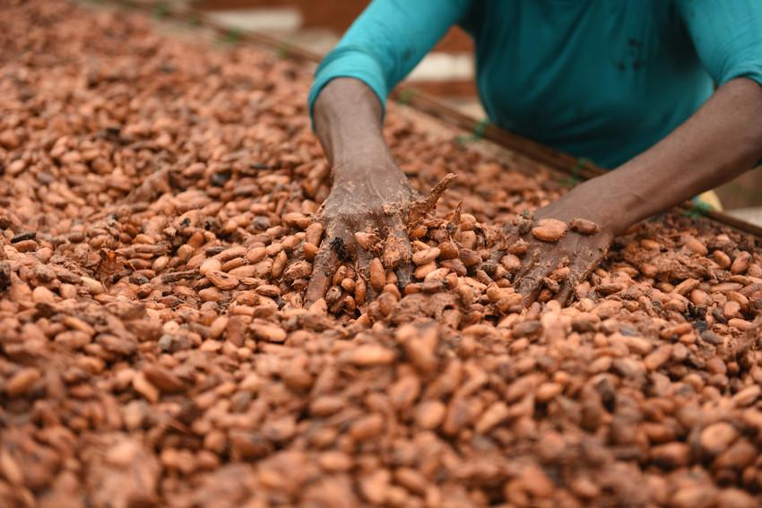 Virginie Raisson caffè e cacao ghana