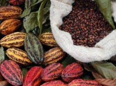torrefazione il mercato del filiera del cacao Perù