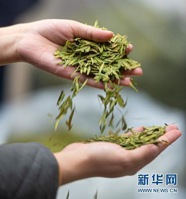 چای سبز تخمیر نشده