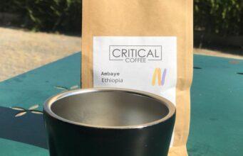 critical coffee nodari erminia